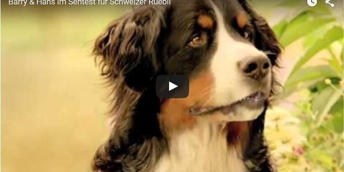 Barry & Hans im Sehtest für Schweizer Rüebli